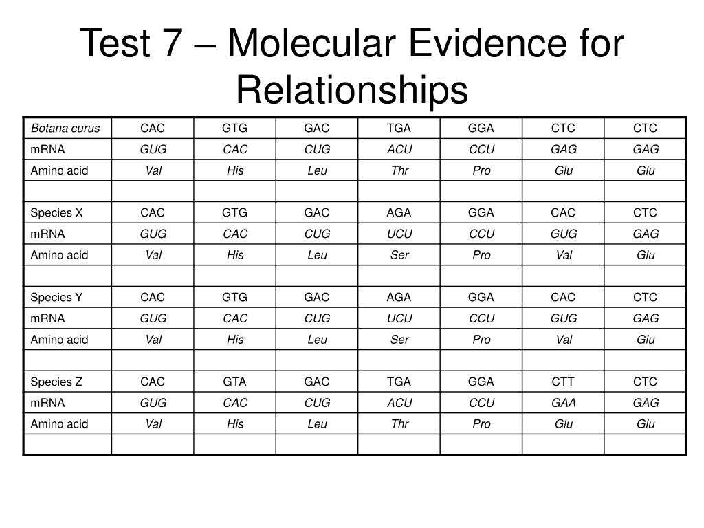 Test 7 – Molecular Evidence for Relationships