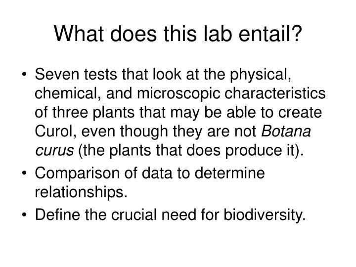 What does this lab entail