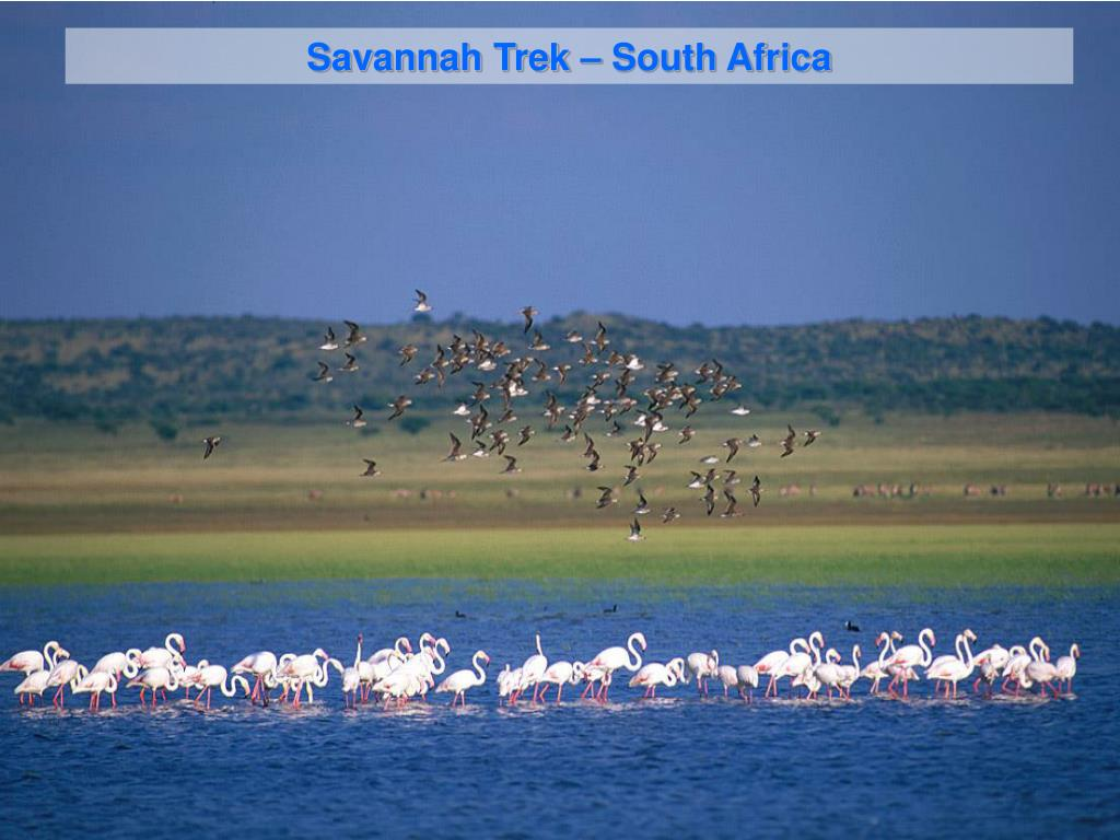 Savannah Trek – South Africa
