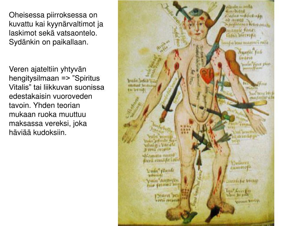 Oheisessa piirroksessa on kuvattu kai kyynärvaltimot ja laskimot sekä vatsaontelo. Sydänkin on paikallaan.