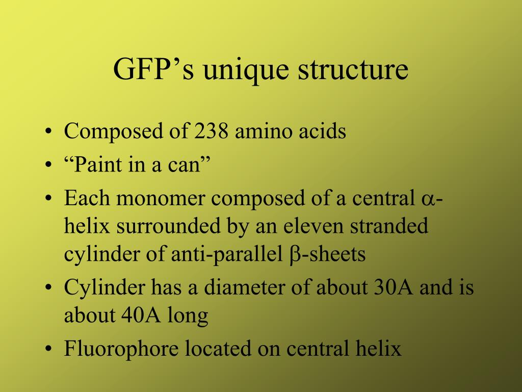 GFP's unique structure