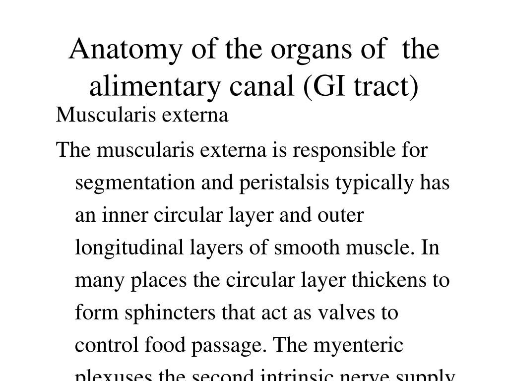 Anatomy of the organs of  the alimentary canal (GI tract)