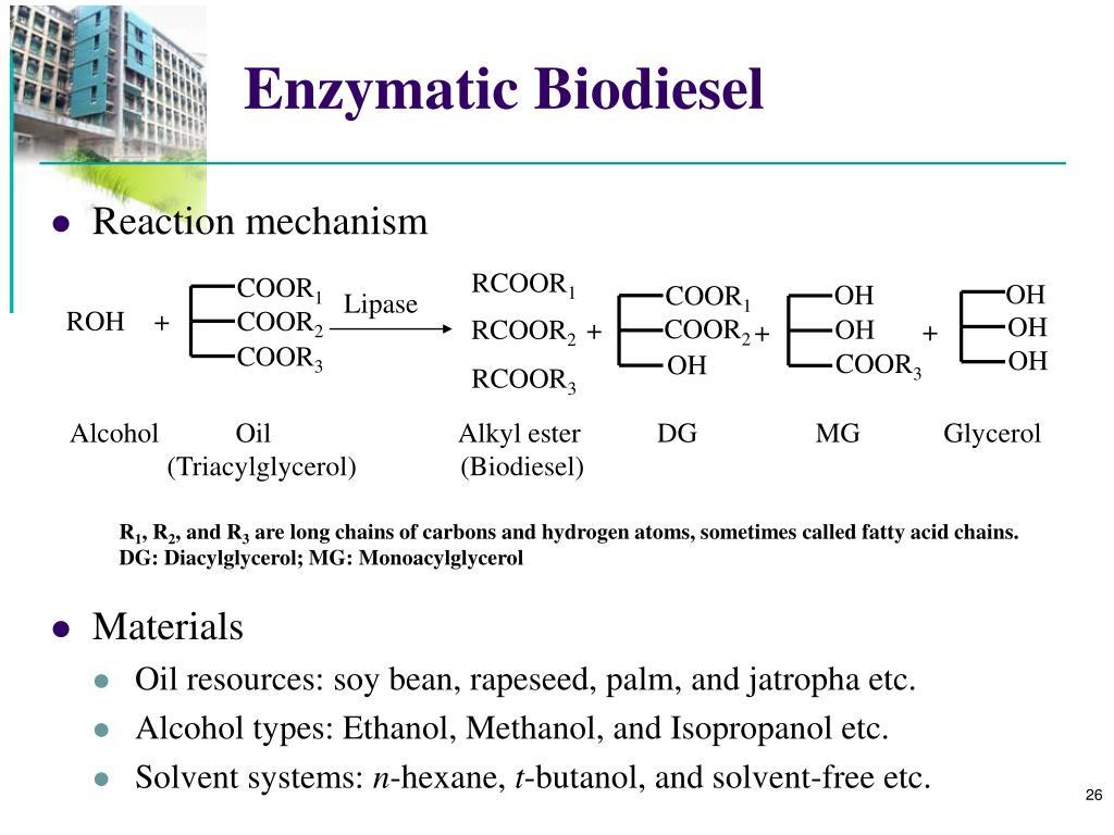 Enzymatic Biodiesel