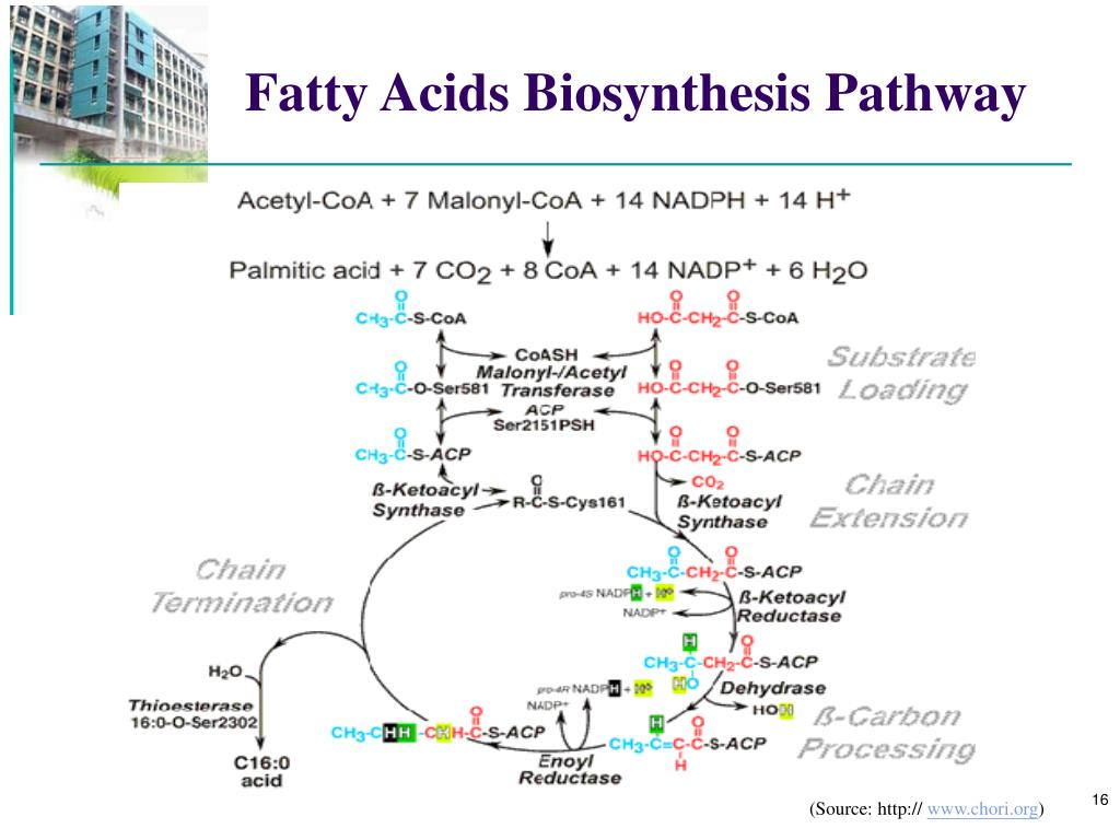 Fatty Acids Biosynthesis Pathway