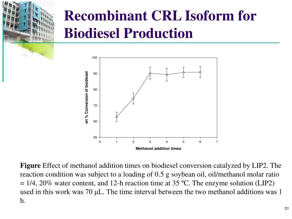 Recombinant CRL Isoform for Biodiesel Production