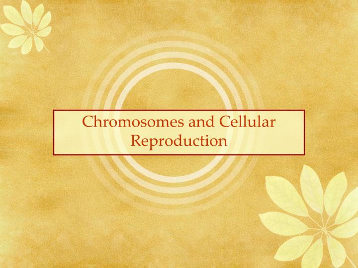 Chromosomes and cellular reproduction l.jpg