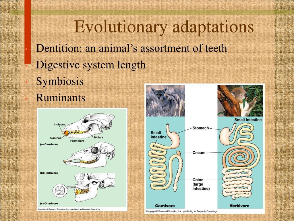 Evolutionary adaptations