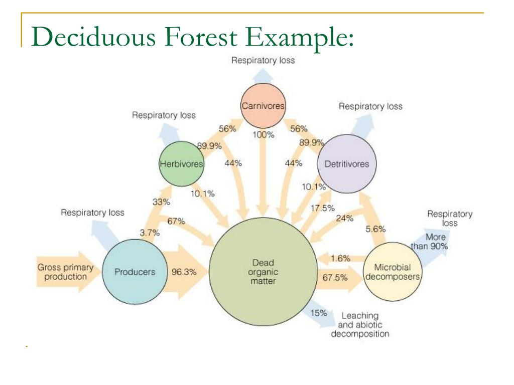 Deciduous Forest Example: