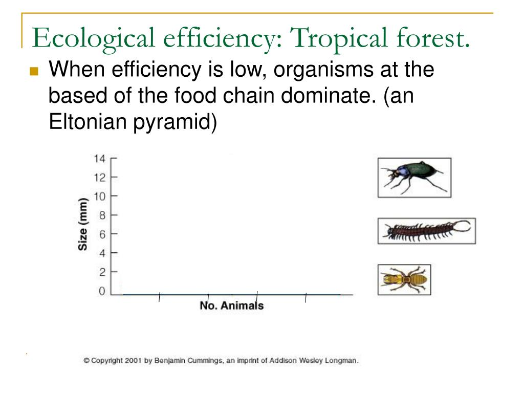 Ecological efficiency: Tropical forest.