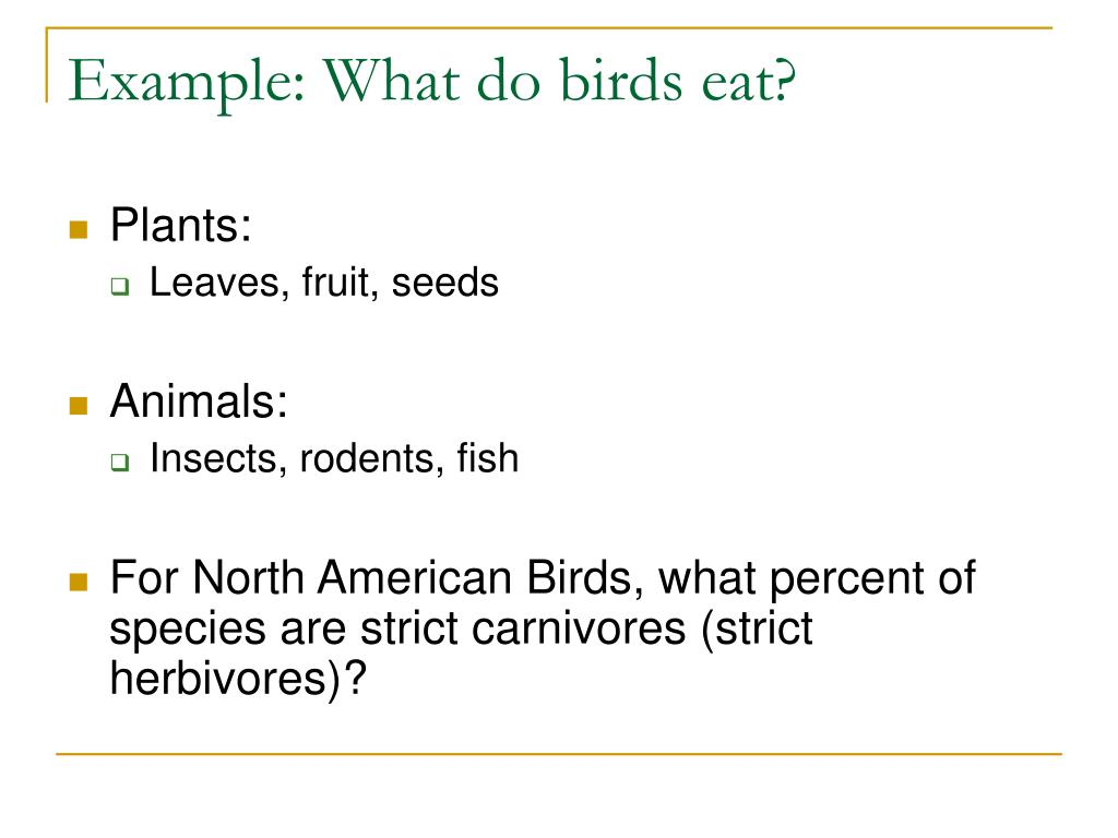 Example: What do birds eat?