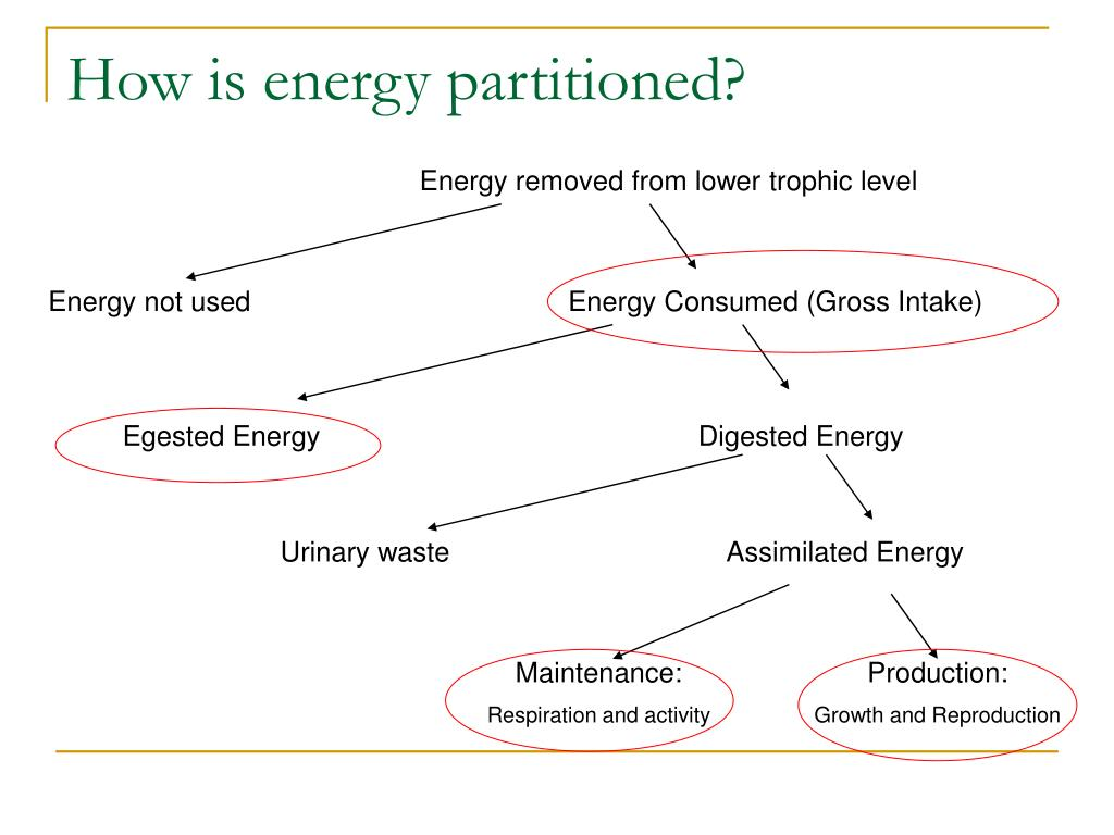How is energy partitioned?