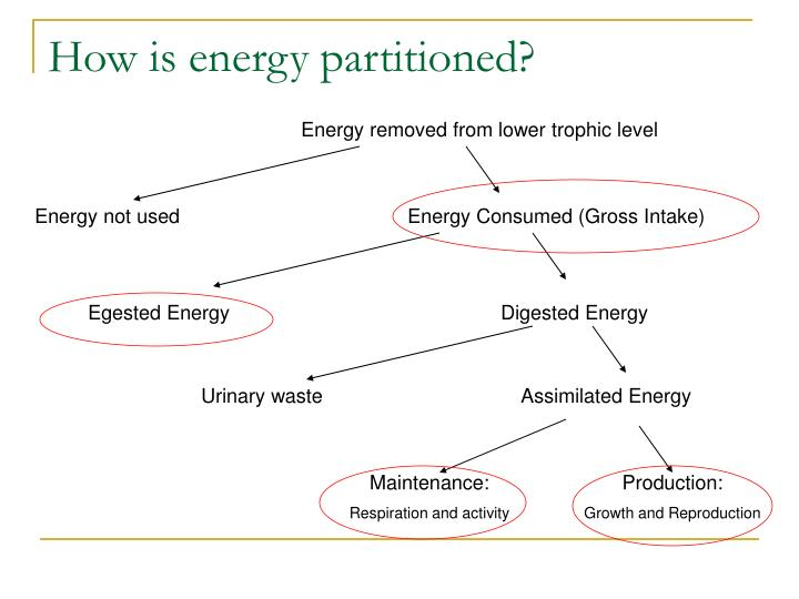 How is energy partitioned l.jpg