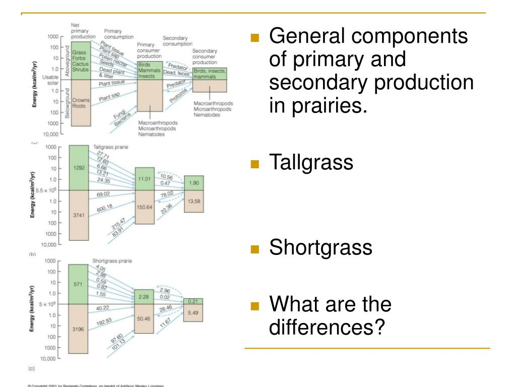General components of primary and secondary production in prairies.