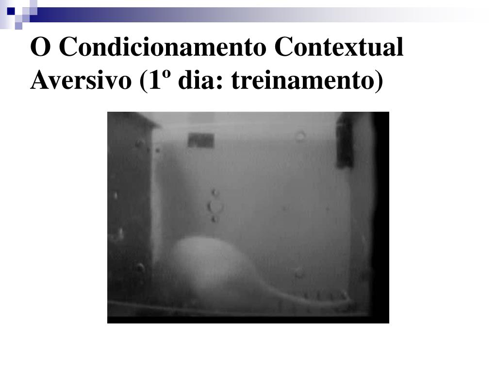 O Condicionamento Contextual Aversivo (1º dia: treinamento)
