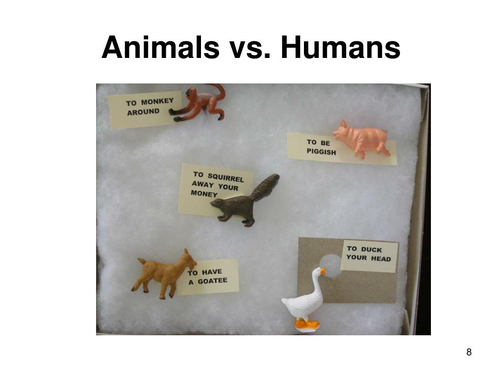 Animals vs. Humans