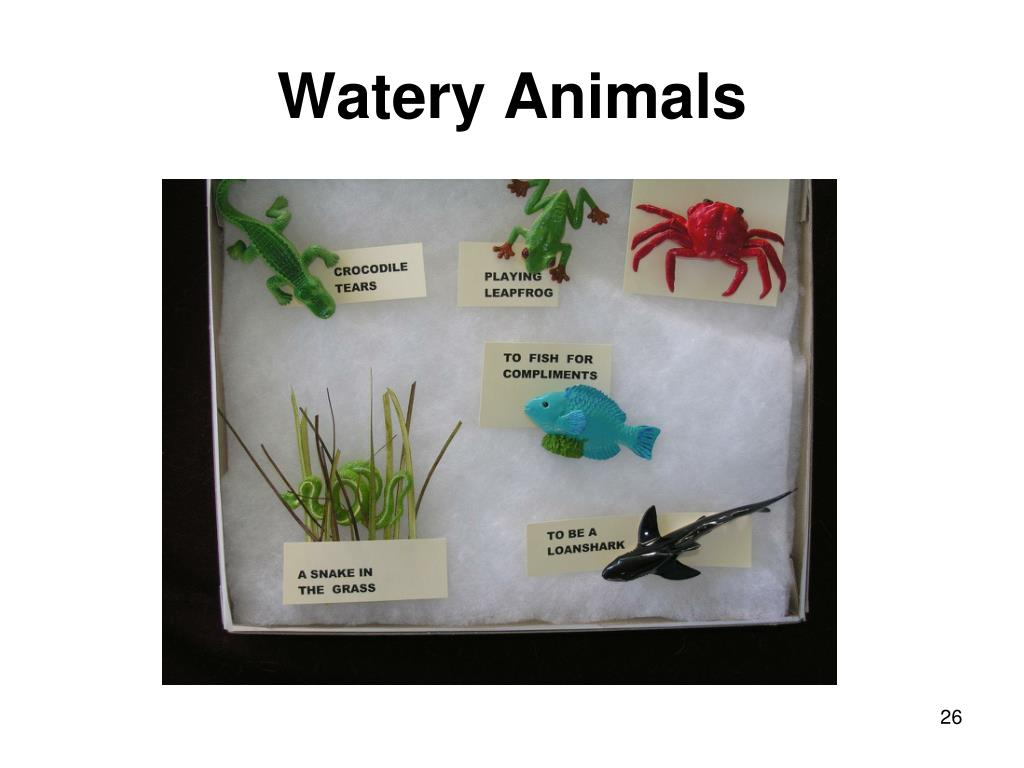 Watery Animals