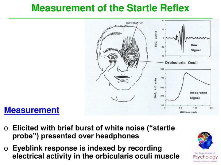 Measurement of the Startle Reflex