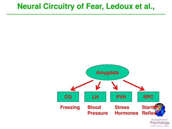 Neural Circuitry of Fear, Ledoux et al.,