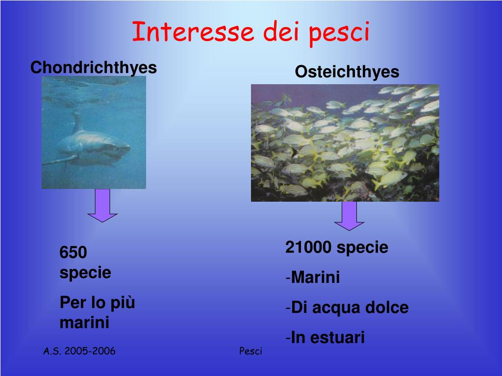 Interesse dei pesci