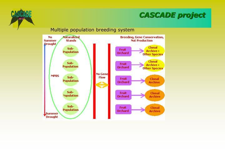 Multiple population breeding system