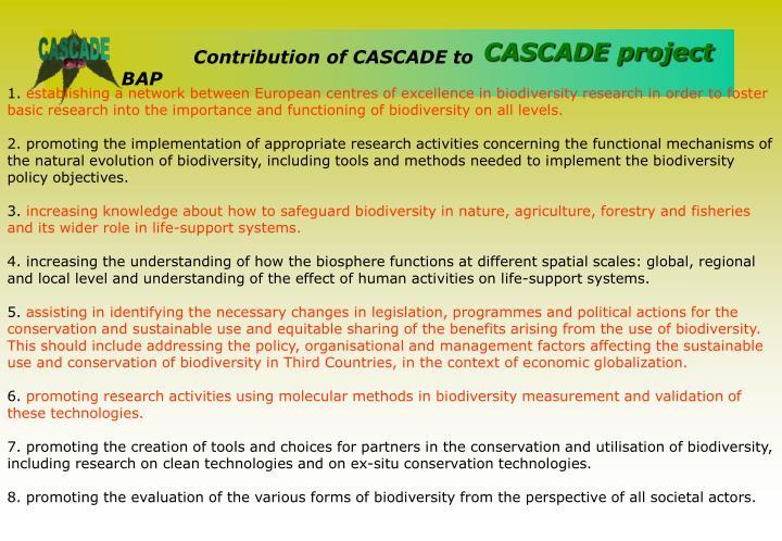 Contribution of CASCADE to BAP