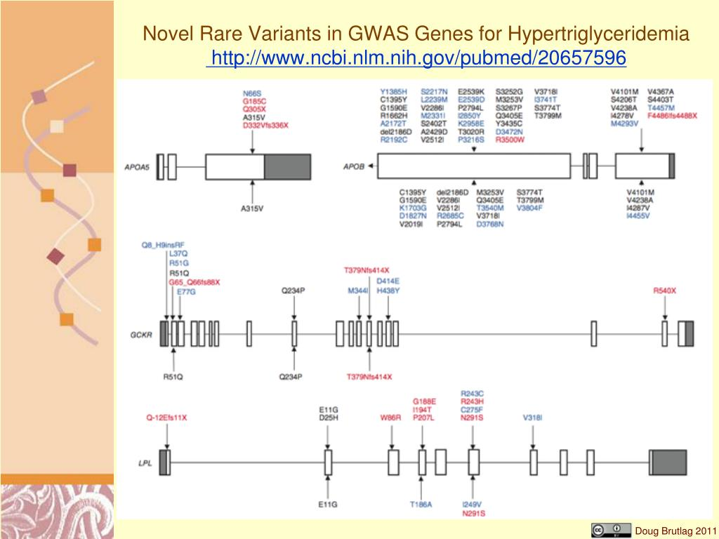 Novel Rare Variants in GWAS Genes for Hypertriglyceridemia