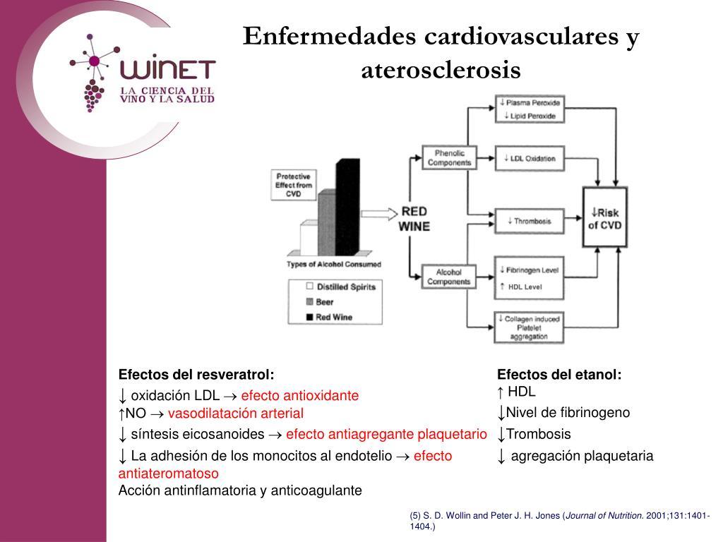 Enfermedades cardiovasculares y aterosclerosis