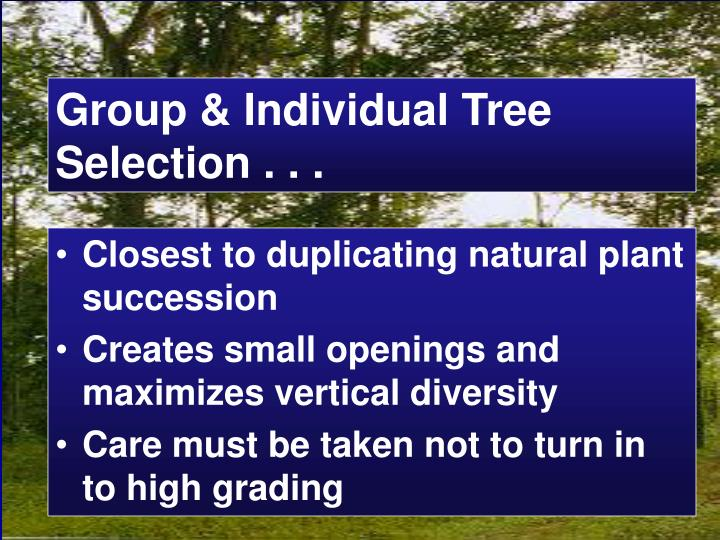 Group & Individual Tree Selection . . .