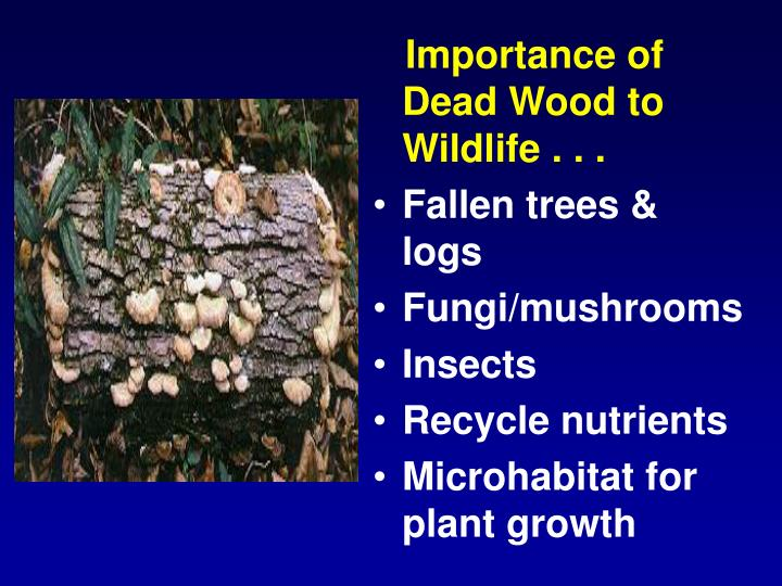 Importance of Dead Wood to Wildlife . . .