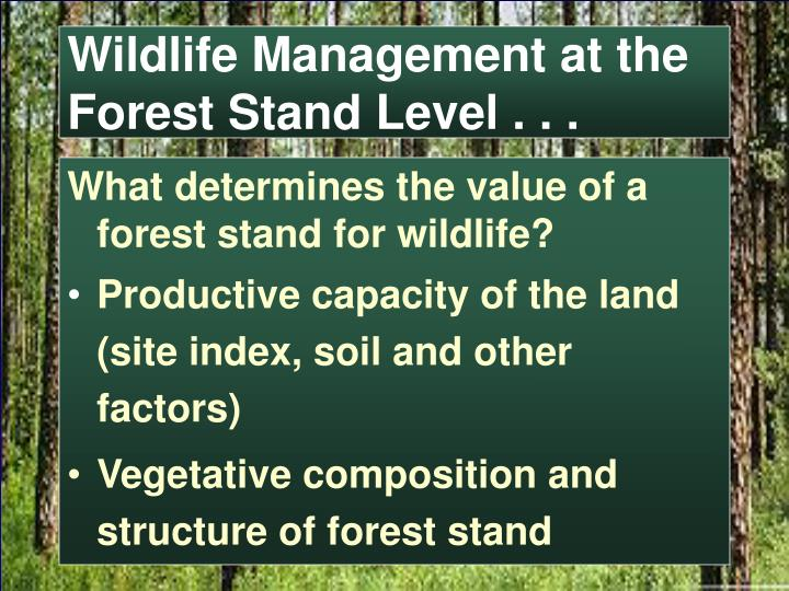 Wildlife Management at the Forest Stand Level . . .