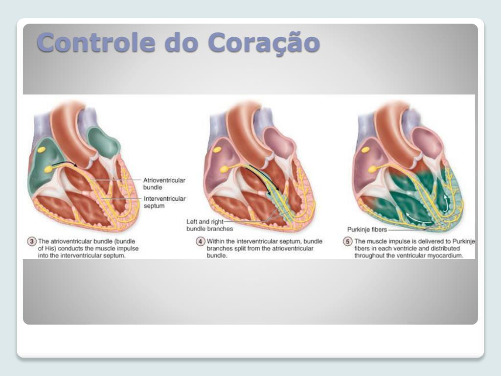 Controle do Coração