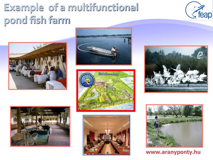 Example  of a multifunctional pond fish farm