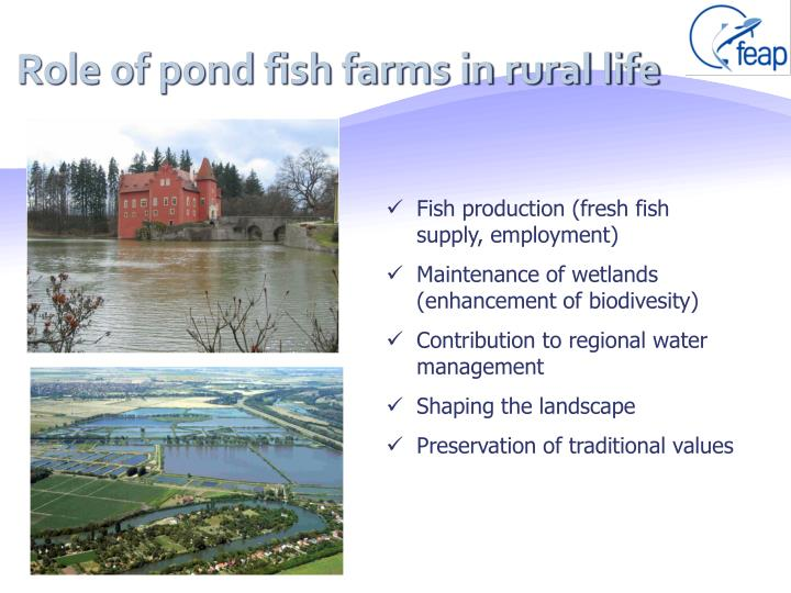 Role of pond fish farms in rural life