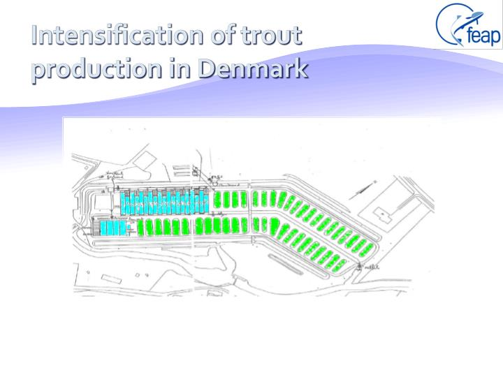 Intensification of trout production in Denmark