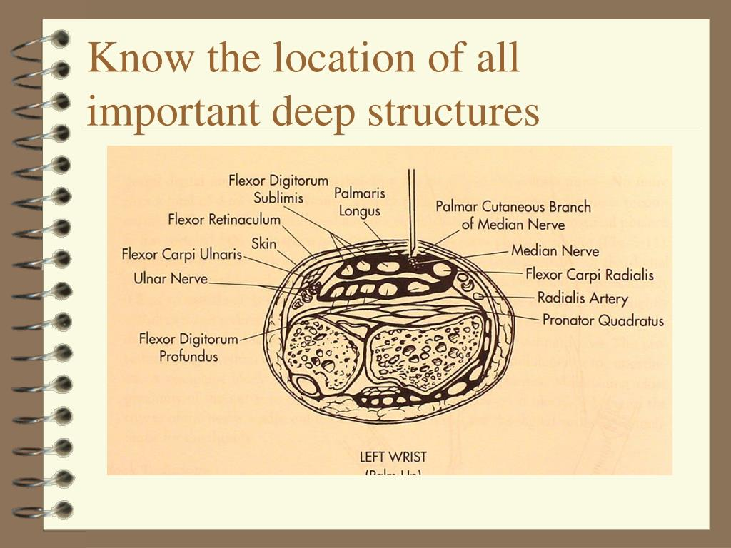 Know the location of all important deep structures