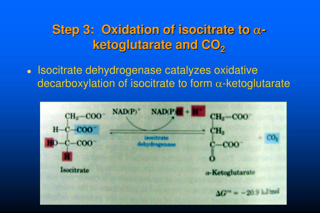 Step 3:  Oxidation of isocitrate to