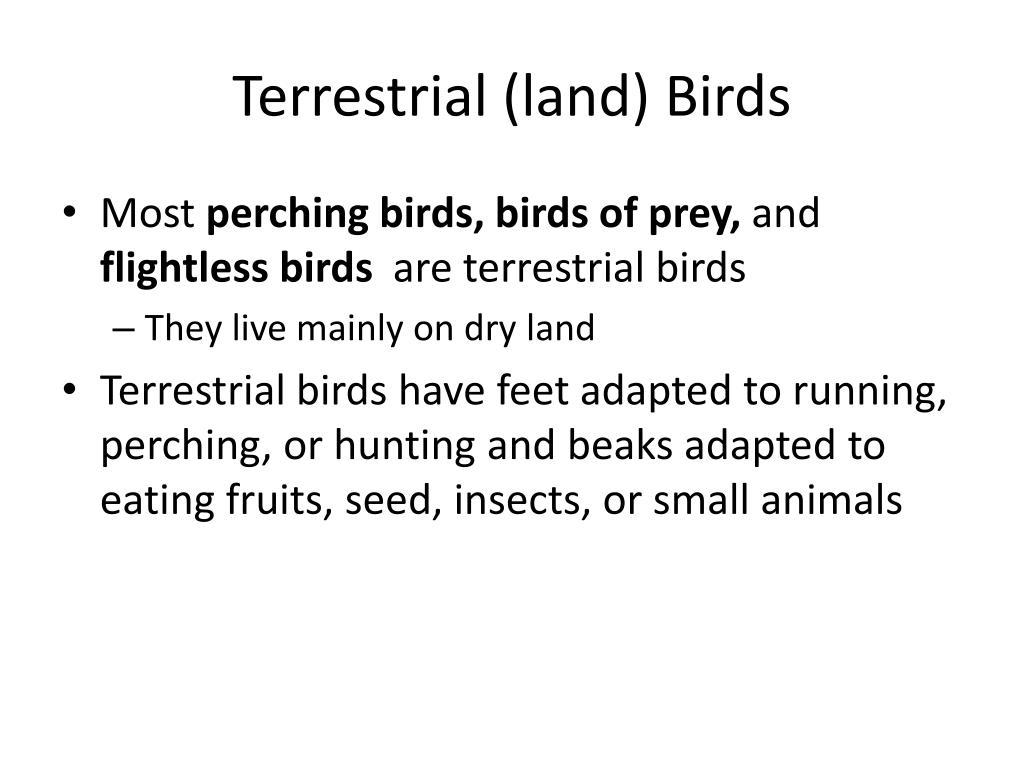 Terrestrial (land) Birds