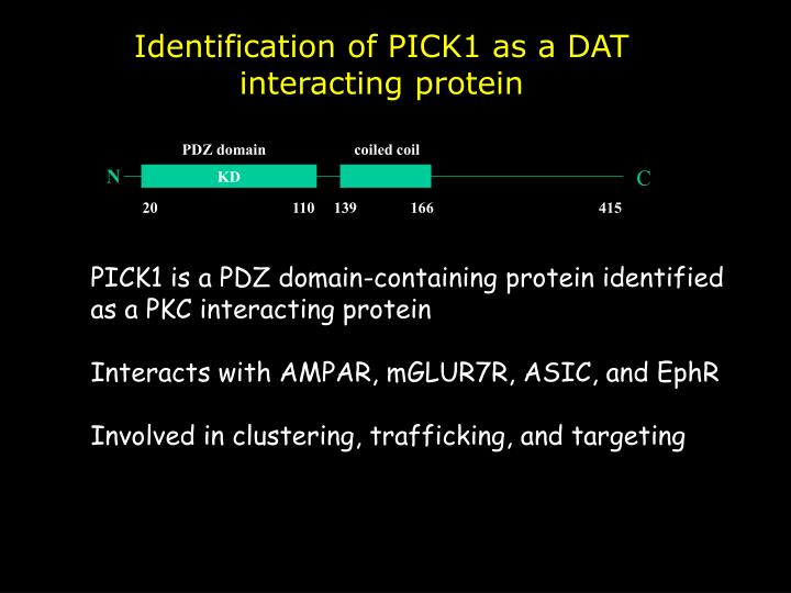 Identification of PICK1 as a DAT