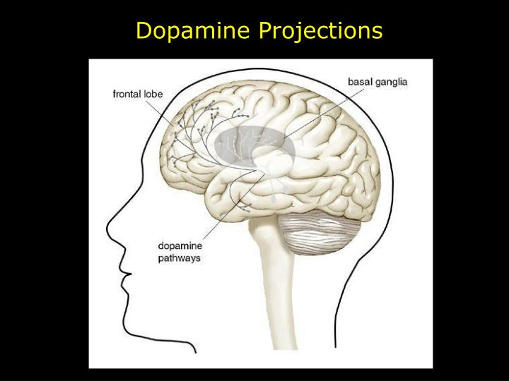 Dopamine Projections
