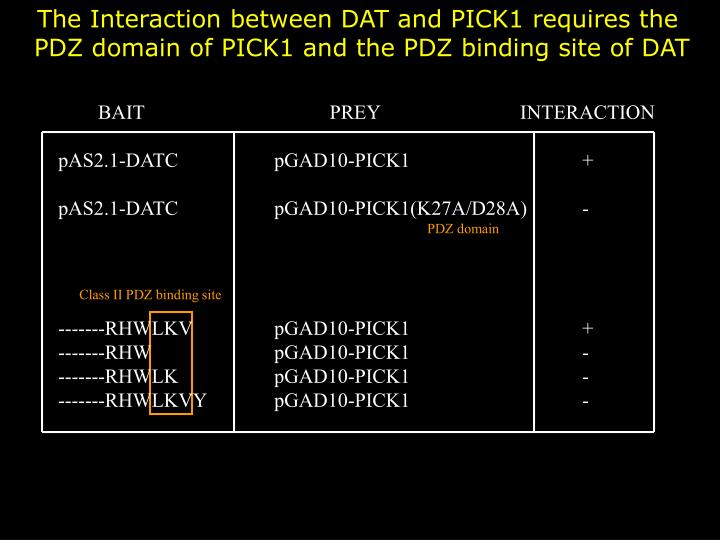 The Interaction between DAT and PICK1 requires the