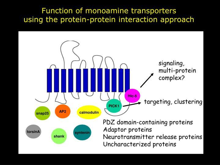 Function of monoamine transporters