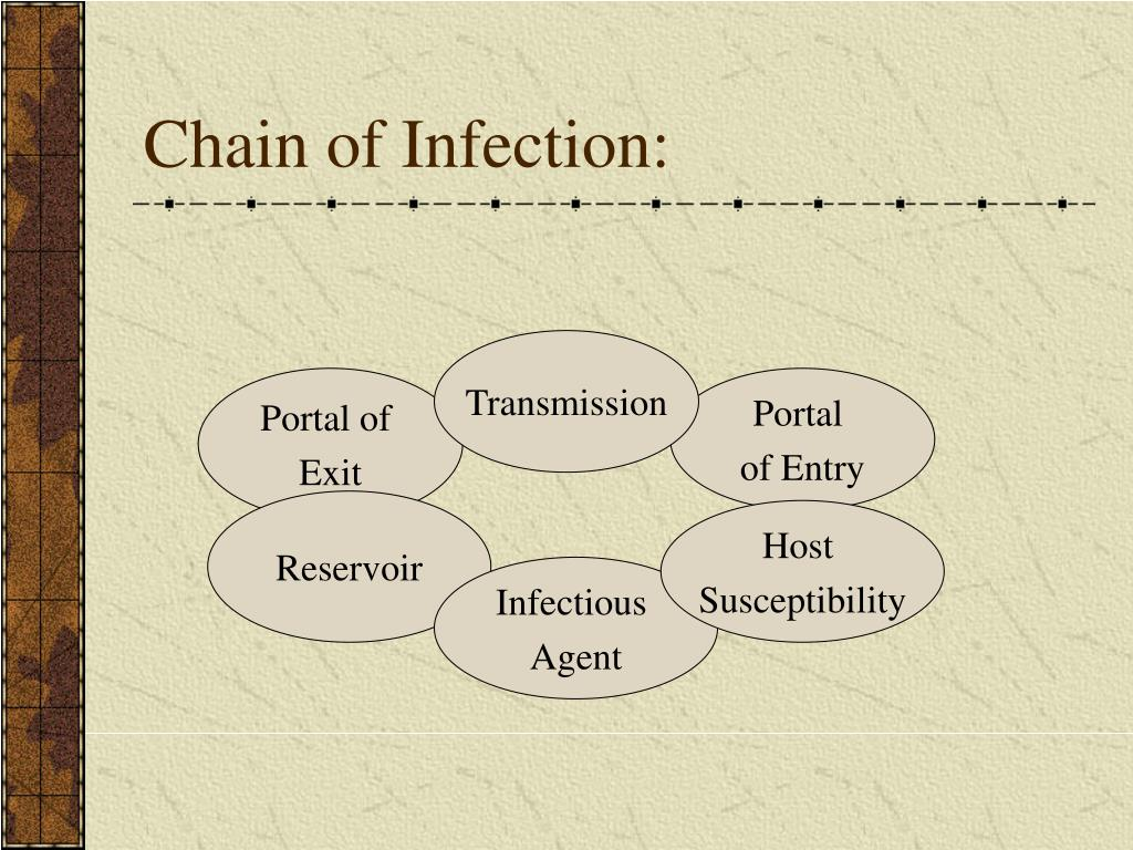 Chains of infections essay