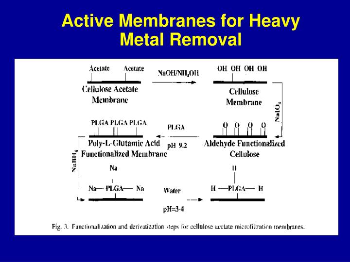 Active Membranes for Heavy Metal Removal