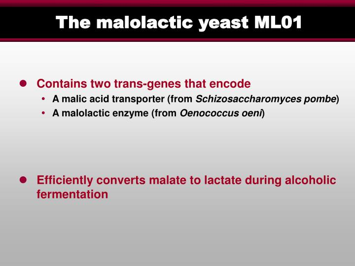 The malolactic yeast ML01