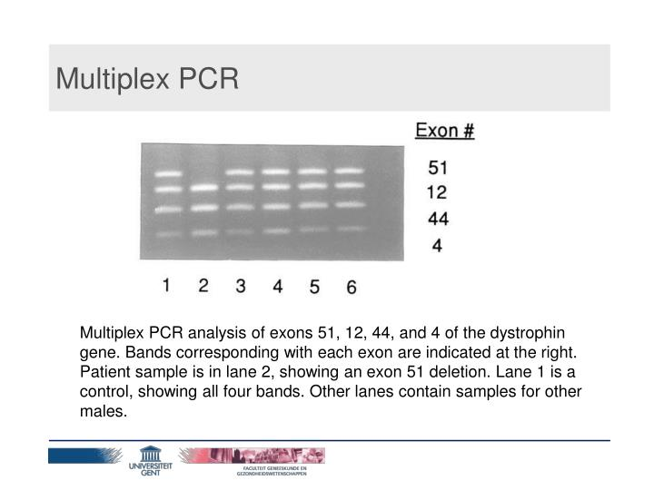 Multiplex PCR
