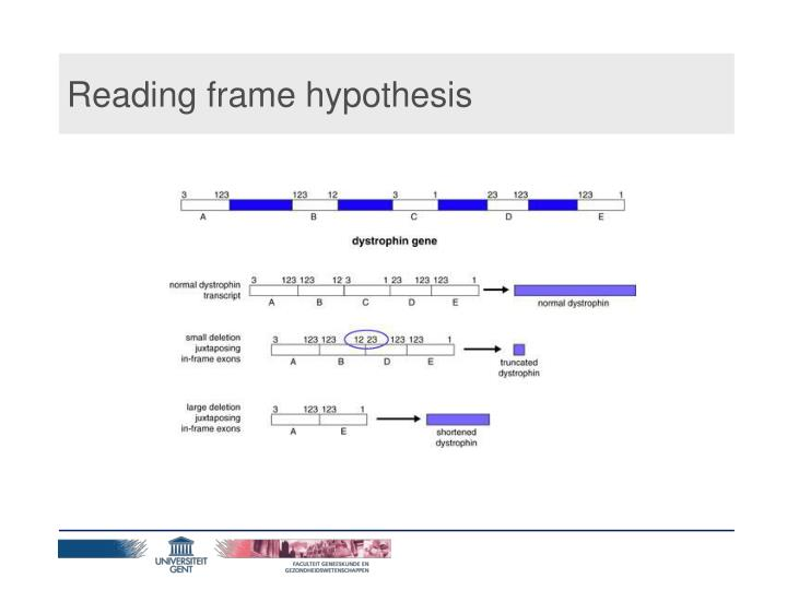 Reading frame hypothesis