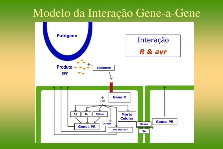 Modelo da Interação Gene-a-Gene