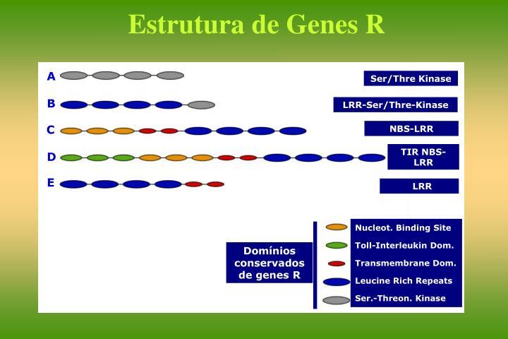Estrutura de Genes R