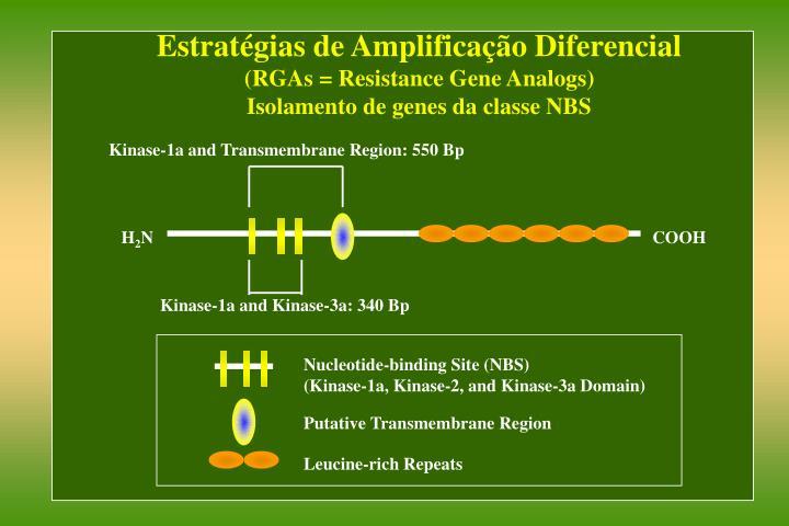 Estratégias de Amplificação Diferencial