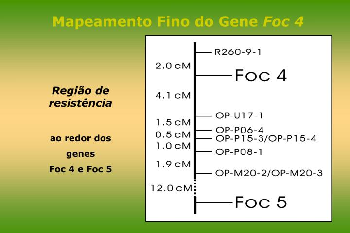 Mapeamento Fino do Gene